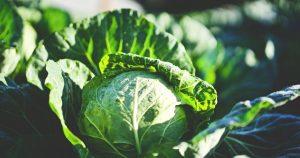 Kohl als Vertreter der Sirtuin-Foods