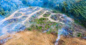 Illegale Abholzung und Rodung für Weidefläche im Amazonas