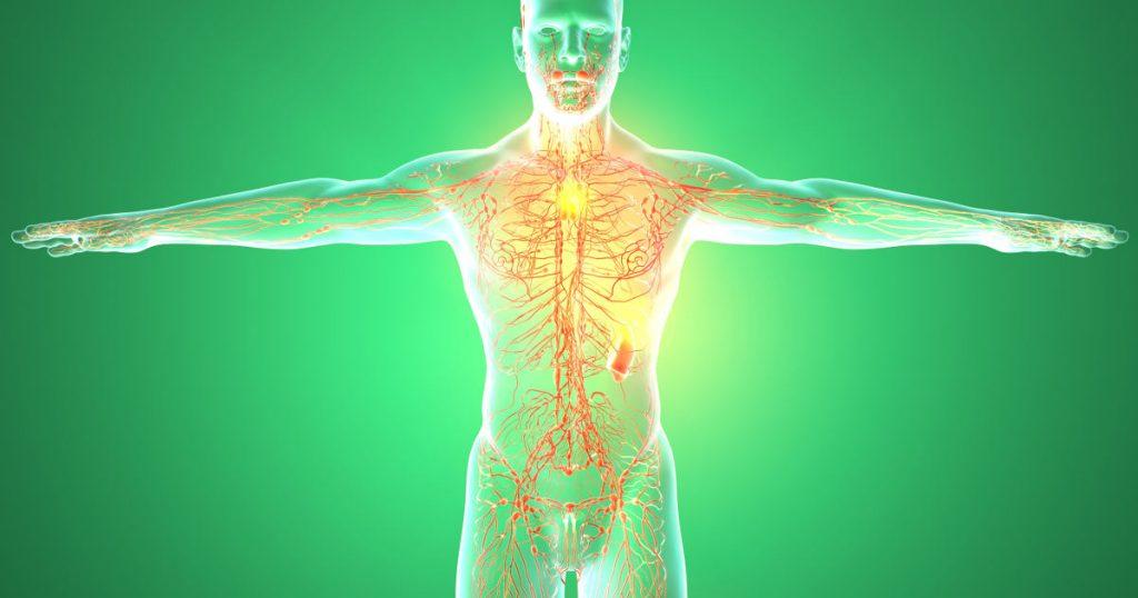 Ein Mensch mit ausgestreckten Armen steht vor einem grünen Hintergrund. Er ist durchzogen von einem Netzwerk der Lymphbahnen.