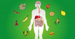 abgebildet ist ein schemenhafter Mensch, bei dem der Magen-Darm-Trakt und das Gehirn abgebildet sind, um Stoffwechselprozesse anzuzeigen. Um die weiß angedeutete Gestalt ist es grün und viele Lebensmittel sind drum herum agebildet.