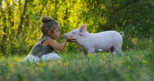Ein kleines Mädchen kniet im Gras vor einem kleinen Schwein und versucht es zu küssen